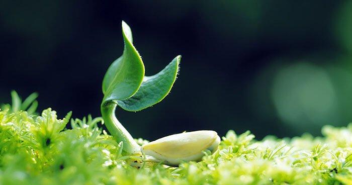 Image-healing-plant